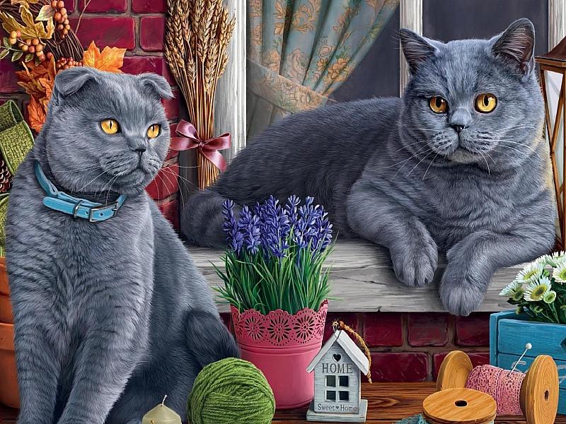 Раскраска алмазная по номерам «Британские коты» — Купить ...